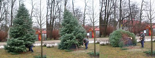 Wo Stand Der Erste Weihnachtsbaum.Weihnachtsbaum Verbrennen 2011